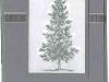 lat2005-ccscsparkleeggplant