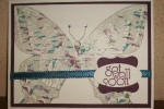 Swallowtail -thumping